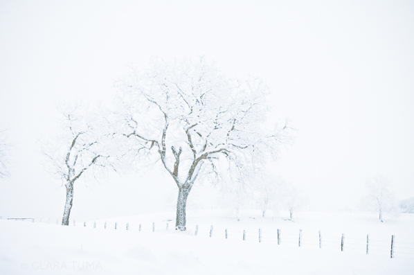 Winter_©ClaraTuma_08.jpg