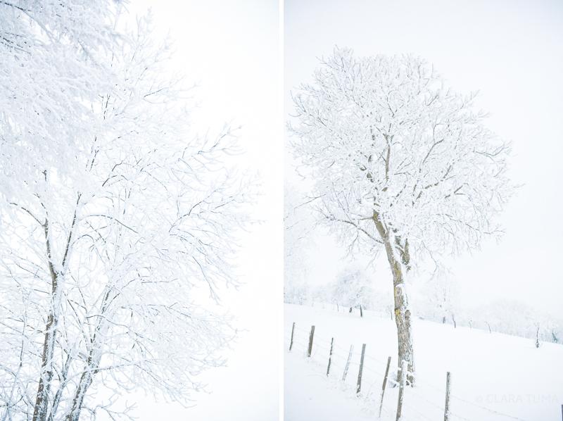 Winter_©ClaraTuma_07.jpg