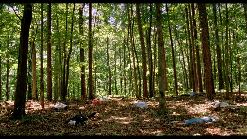 14_Woods.jpeg