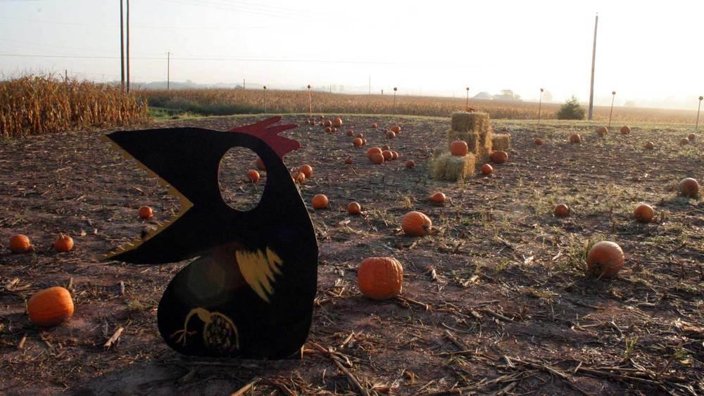 PumpkinPatchCrow.jpg