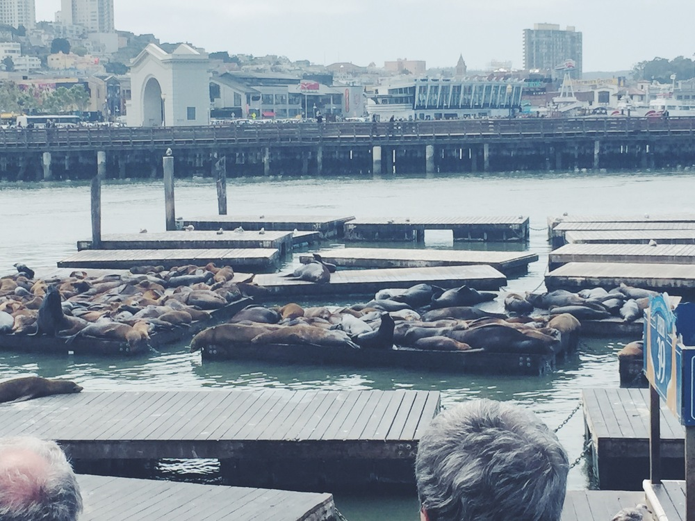 Pier 39 - Sea Lions on Docks