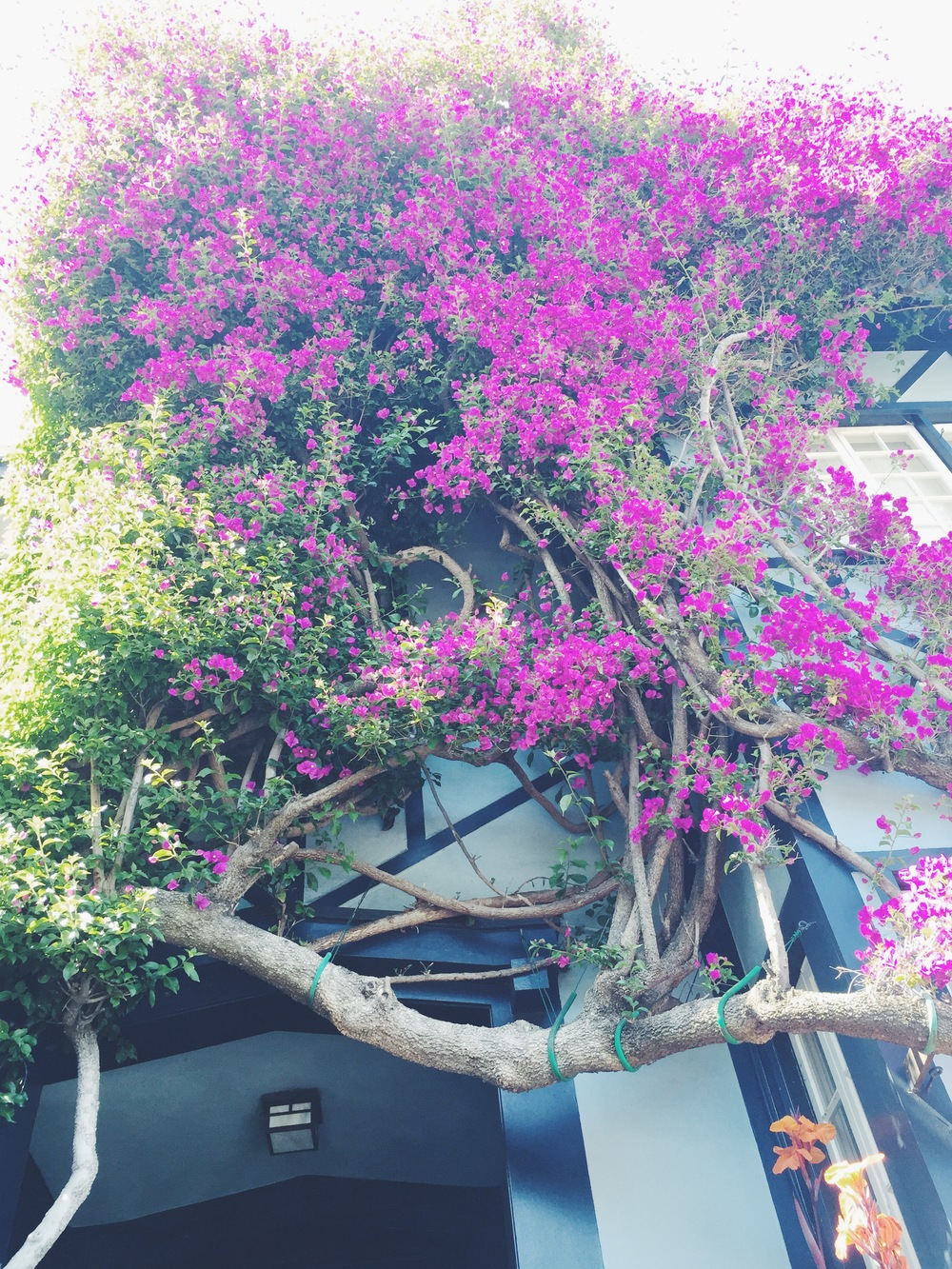Lumbard - Flowers 1