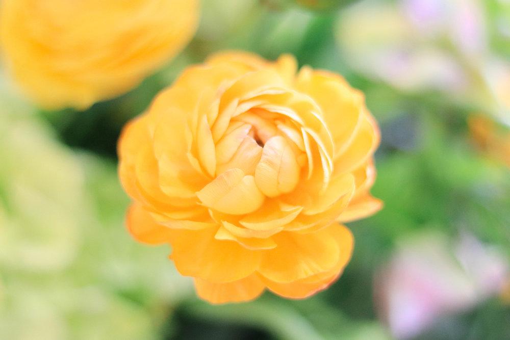 Blomst Floral Design-21.jpg