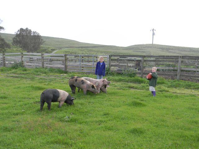 lea larry pigs.jpg