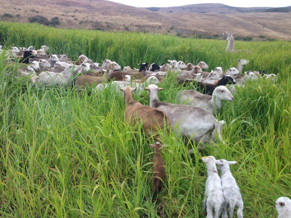 sheeppasture.jpg