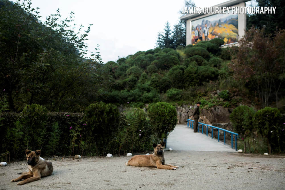 Young guard dogs and their owner watch over the entrance to the Inner Chilbo scenic area
