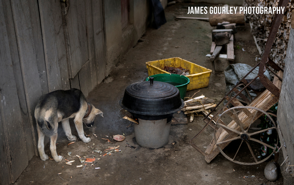 A dog eats scraps of crab outside a house in a village in Sea Chilbo