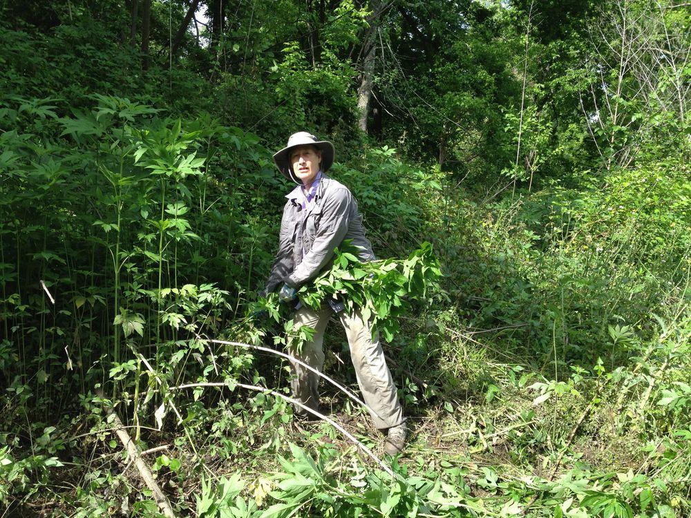 ragweed patrol.jpg