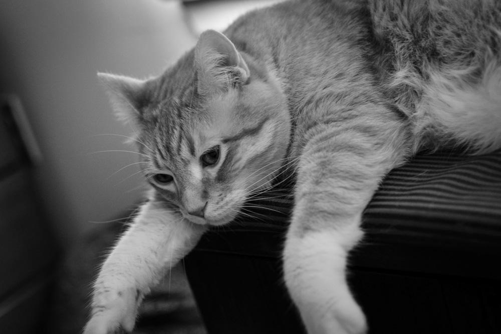cats+(1).jpg