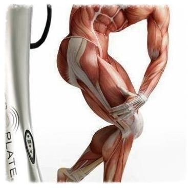 pp muscle.jpg