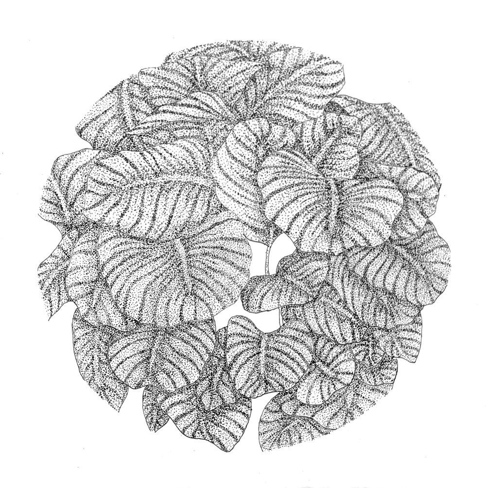 "5"" x 5"" - Leaves"