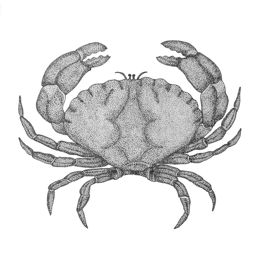 """5""""x5"""" - Crab"""