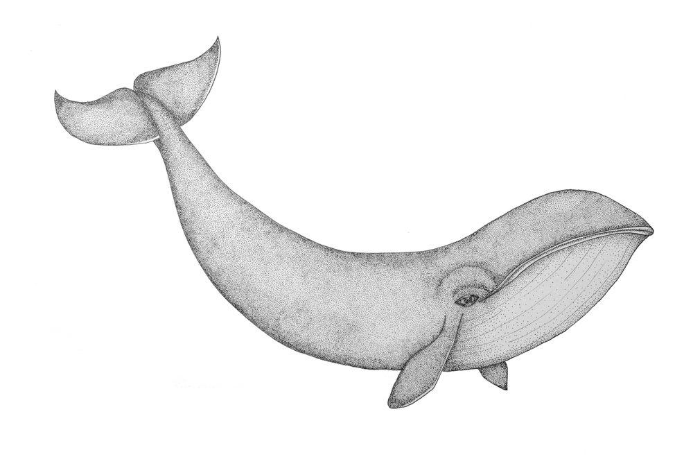"""14"""" x 11"""" - Whale"""