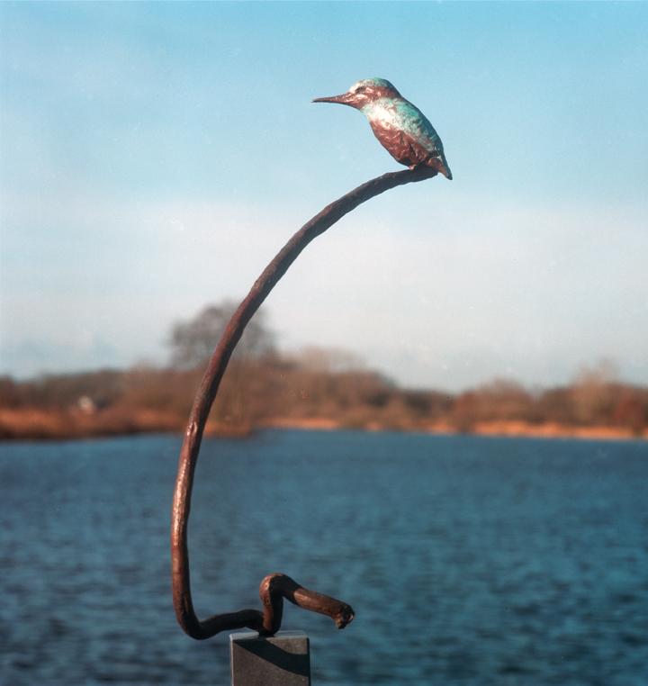IJsvogel op tak