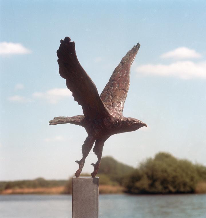 Roofvogel+in+vlucht+Jonneke+Kodde.jpg
