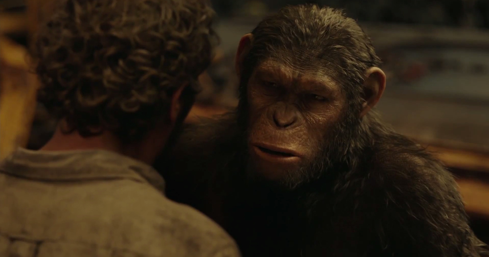apes2b.jpg