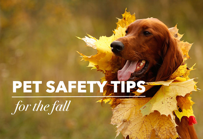 fall-pet-safety.jpg