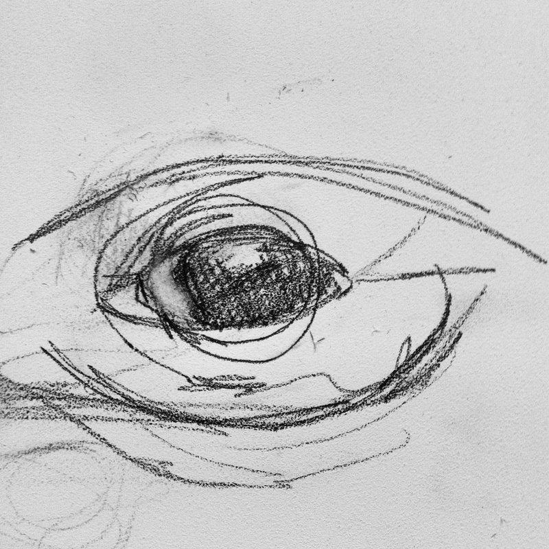I am determined to get the eye right. It's incredible how human a humpback whale's eye is!