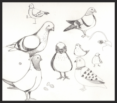 pigeon studies