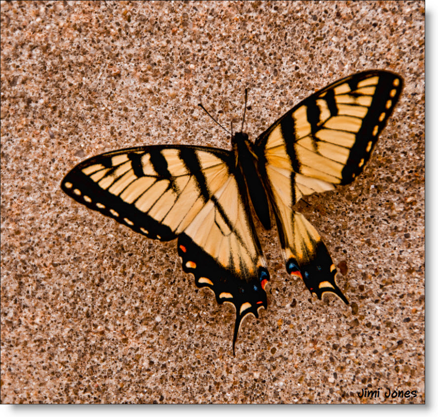 Butterfly on the Sidewalk