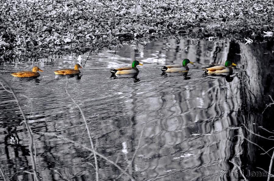 Get Your Ducks in a Row - SC