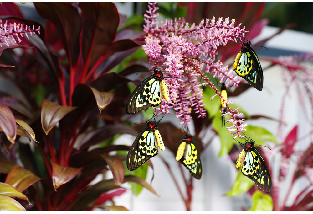 003-butterfly.jpg