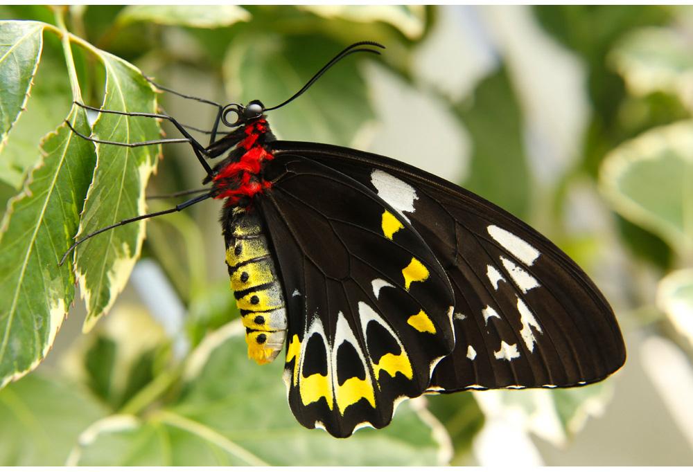006-butterfly.jpg