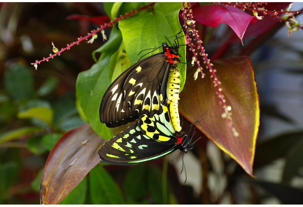 008-butterfly.jpg