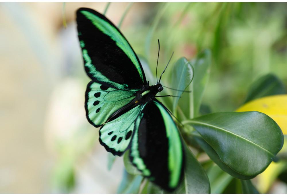 010-butterfly.jpg