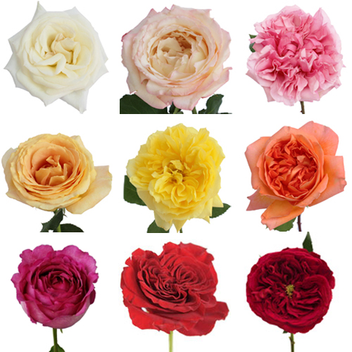 Budgets flower availability marlipaige floral designs for Roses to colour in