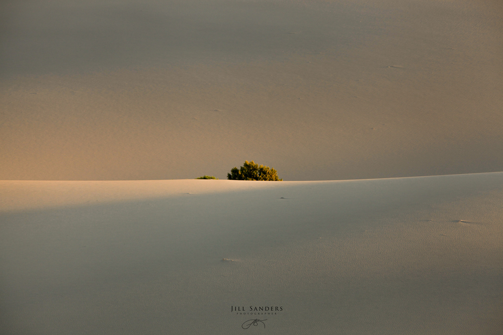 dunes-1-4.jpg