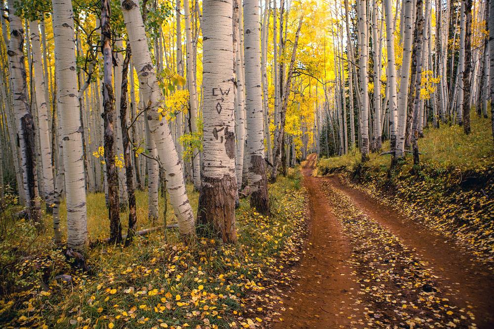 """Aspen Path"""