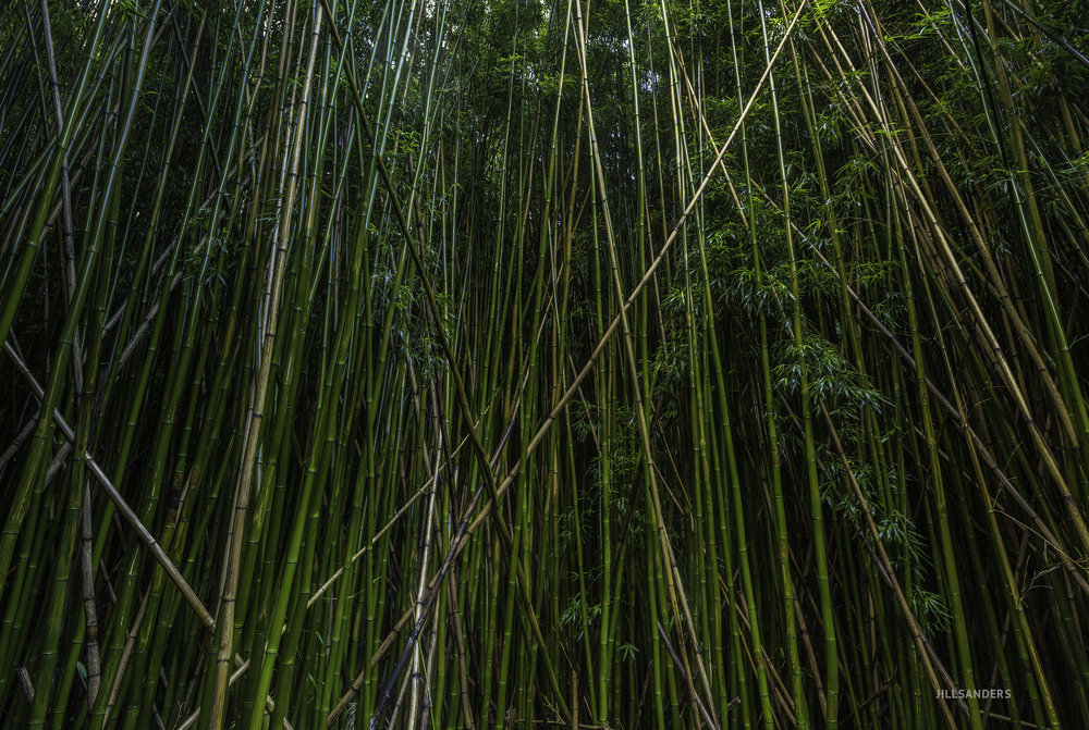 maui_bamboo_logo.jpg