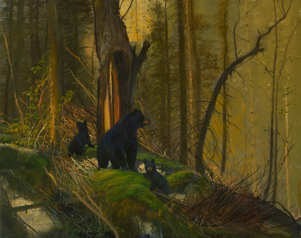 Black Bears on the South Fork