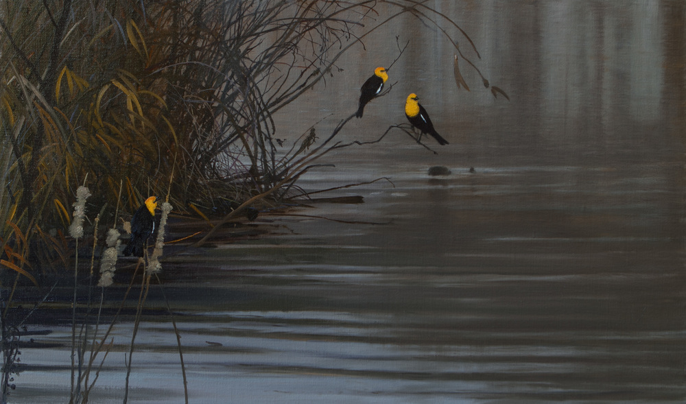 Yellow Headed Blackbirds by Michael Coleman
