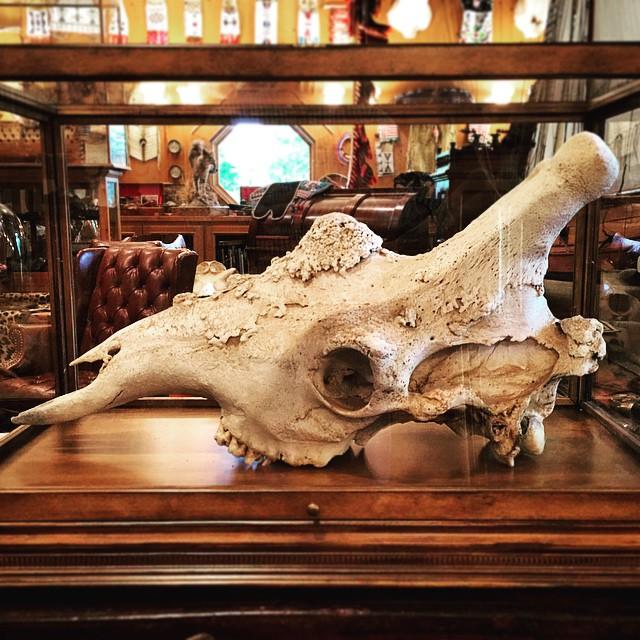 Giraffe #skull in #michaelcolemanart #studio #colemanart #colemanstudios #artofmanliness