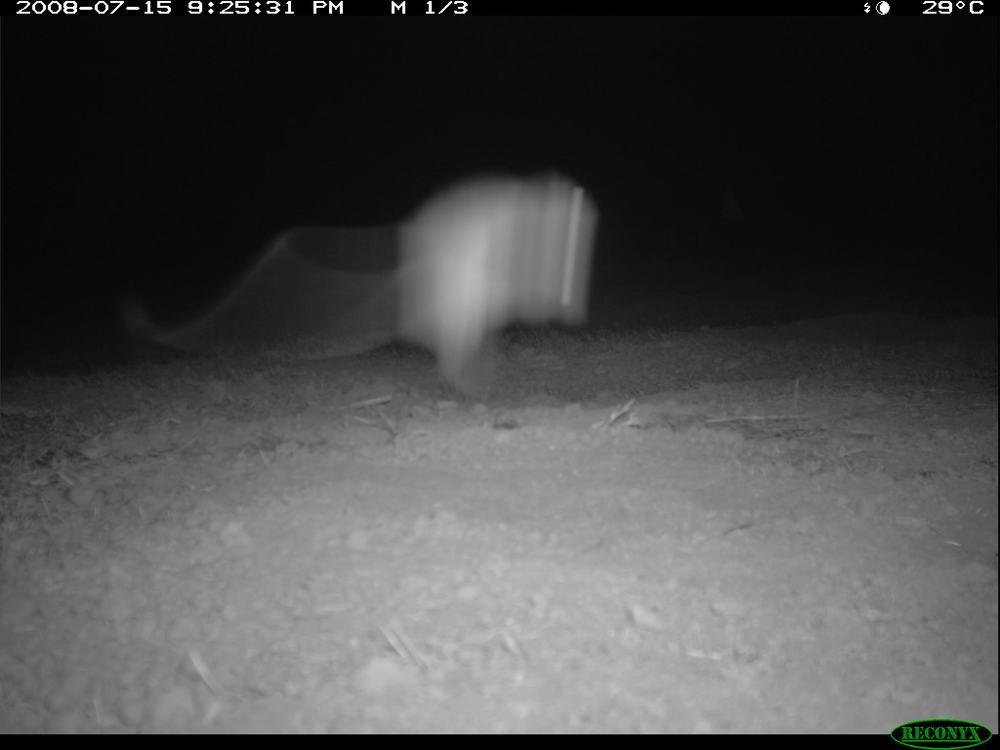 7-16 camera 2 krat jump2.JPG