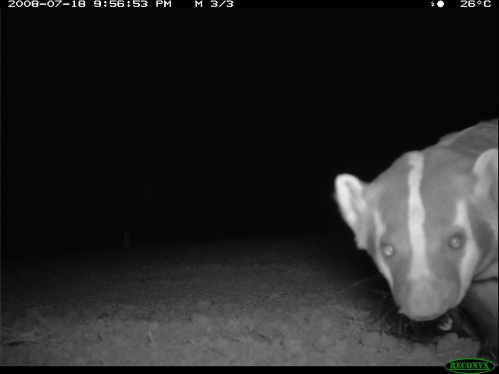 badger 7-19 camera 2.JPG