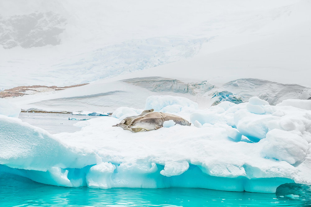 Crabeater Seals and Coast