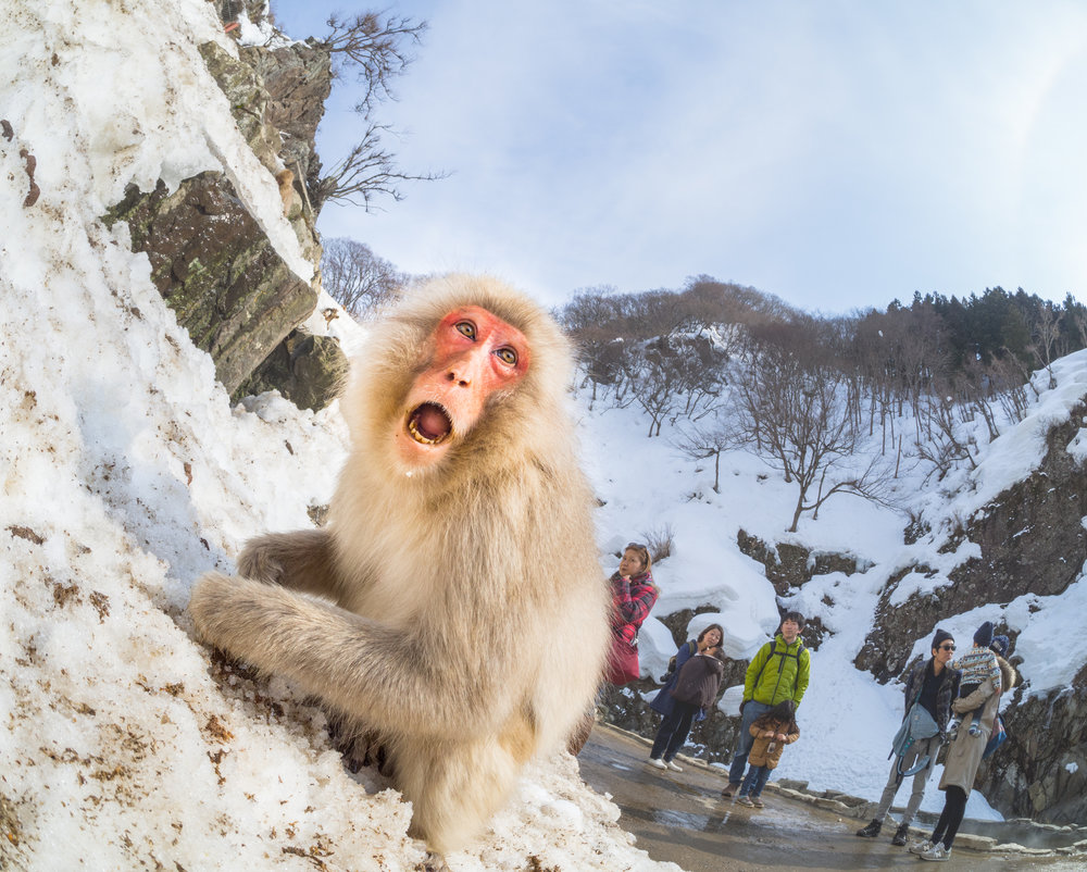 Welcome, Japanese Monkey to the World