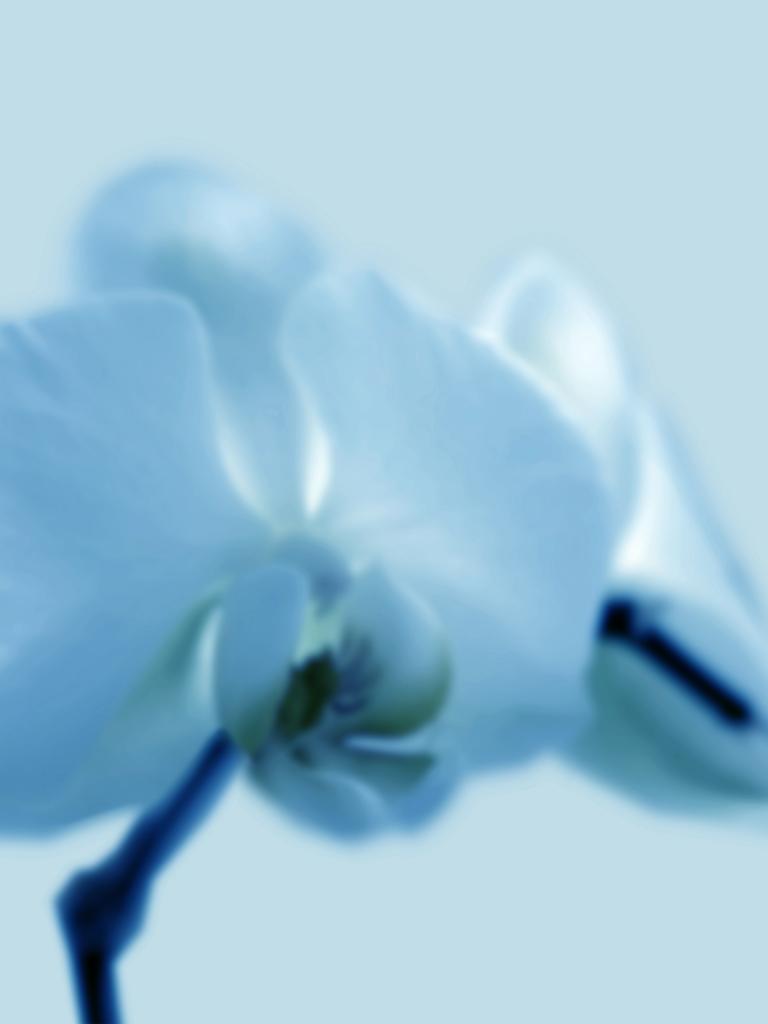 DLJ Orchid 2 cyan
