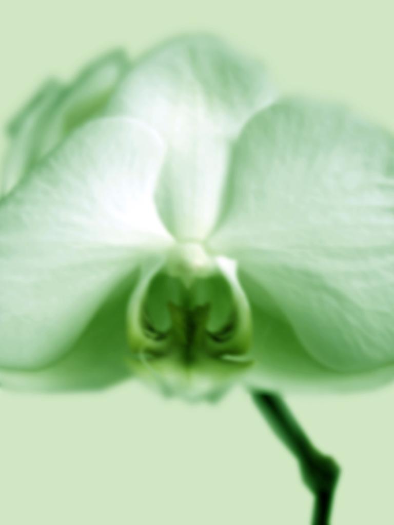 DLJ Orchid 1 Green