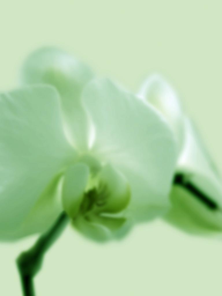 DLJ Orchid 2 Green