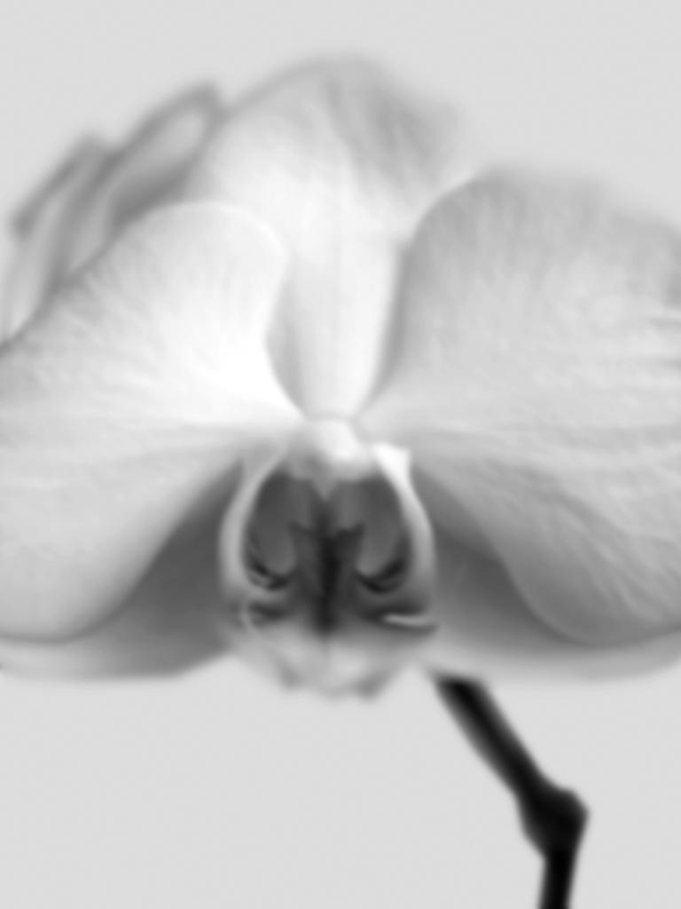 DLJ Orchid 1 Grey