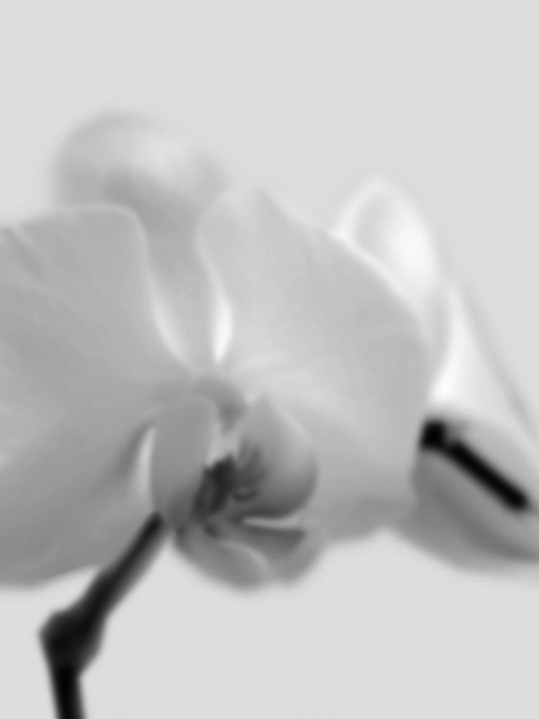 DLJ Orchid 2 Grey