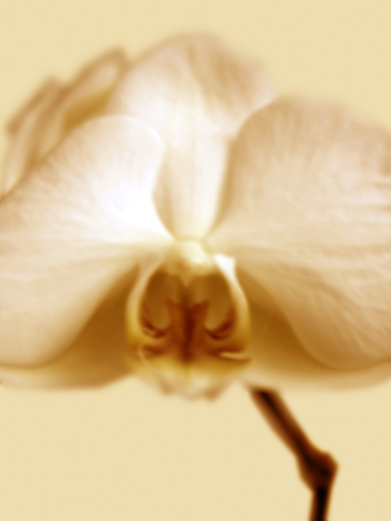 DLJ Orchid 1 Light ornage