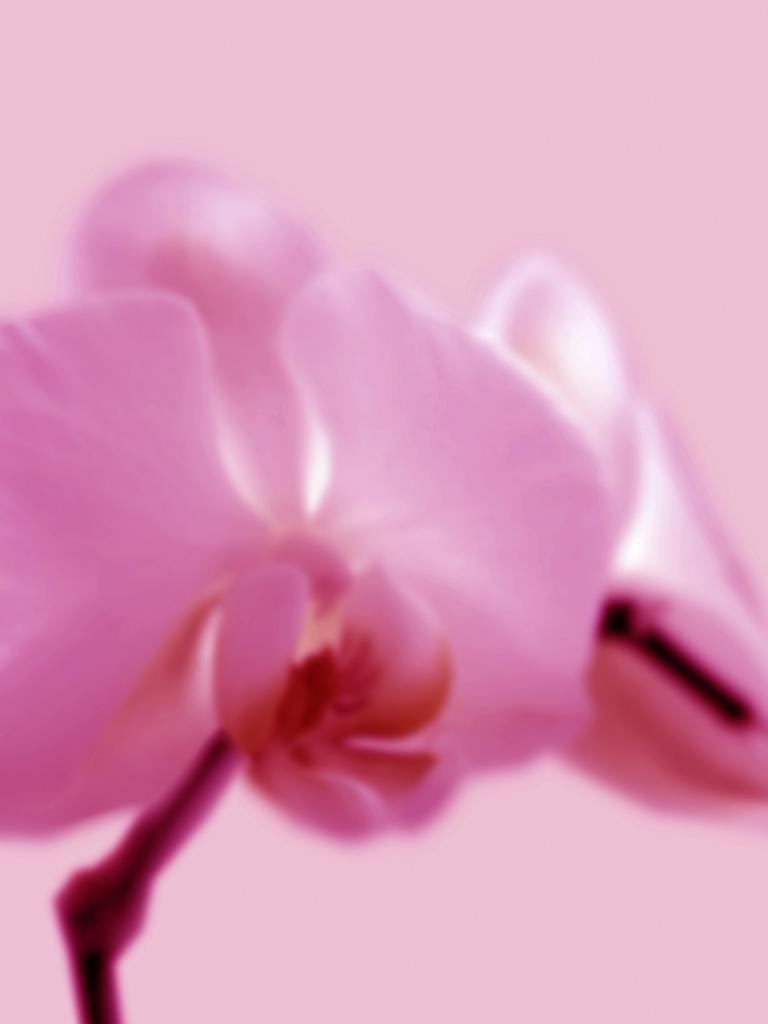DLJ Orchid 2 Magenta
