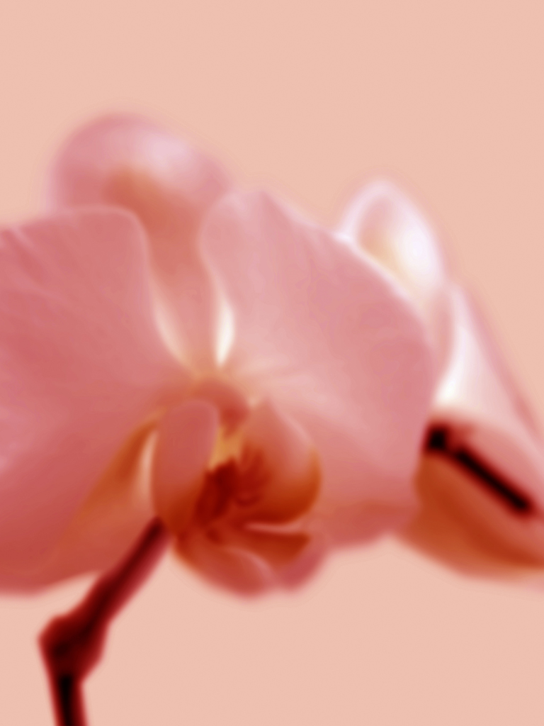 DLJ Orchid 2 Orange