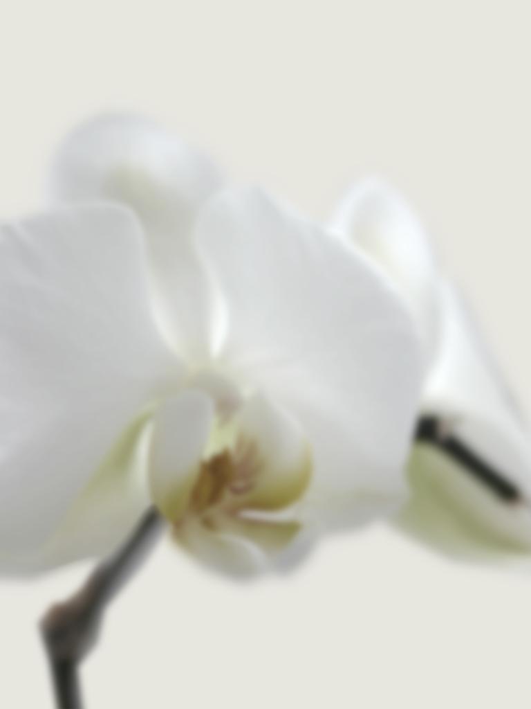 DLJ Orchid 2