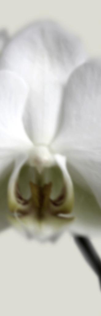 DLJ Orchid 1 Slim